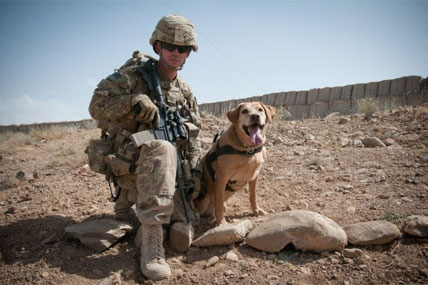 K 9 Teams Help Ied Fight In Afghanistan Military Com