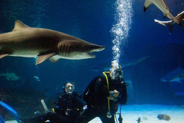 Naval swimmers with sharks