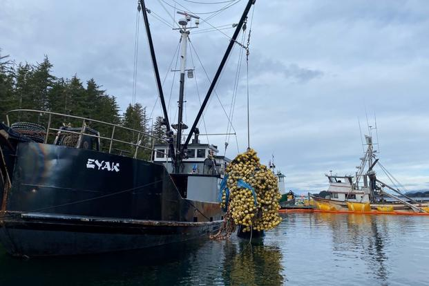 Recovering the net that was contaminated with fuel where the Haida Lady sank near Sitka, Alaska.