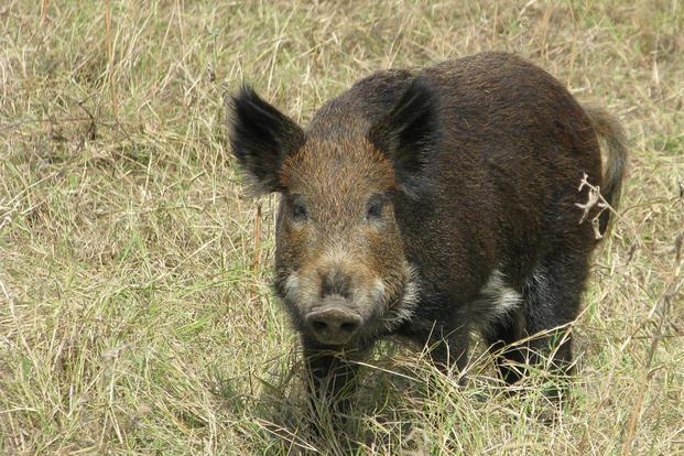 Wild hogs full sex scene video