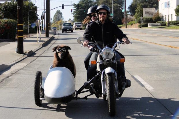 This October 3, 2014, photo provided by Eric Ristau shows Artie a rescued Newfoundland, riding in a side car with Rebecca Hodges and Joe Baker in Redding, Calif. These dogs are mastiffs, Labradors and Chihuahuas and come from all parts of the country.