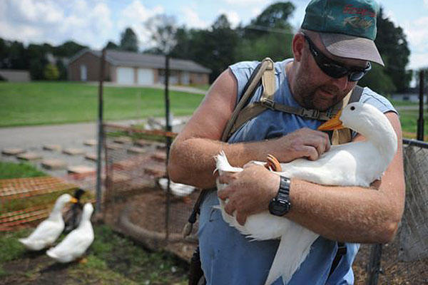 Iraq war veteran Darin Welker, 36, of West Lafayette, Ohio, says his 14 pet ducks serve as mental and physical therapy for him. He's worried he'll have to give them up after village officials told him he can't keep them on his property. Trevor Jones/AP