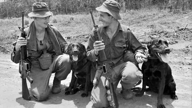Beautiful War Army Adorable Dog - 3527158388_7a4ba655c1_o-1024x691-copy  Snapshot_921827  .jpg?itok\u003d3_nLAc8L