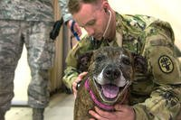 .S. Army Capt. Drew Henschen examines a pet during an ordered departure processing line at Incirlik Air Base, Turkey.