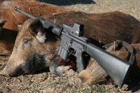 .450 Bushmaster with hogs